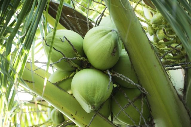 ココナッツをはじめナッツ系オイル