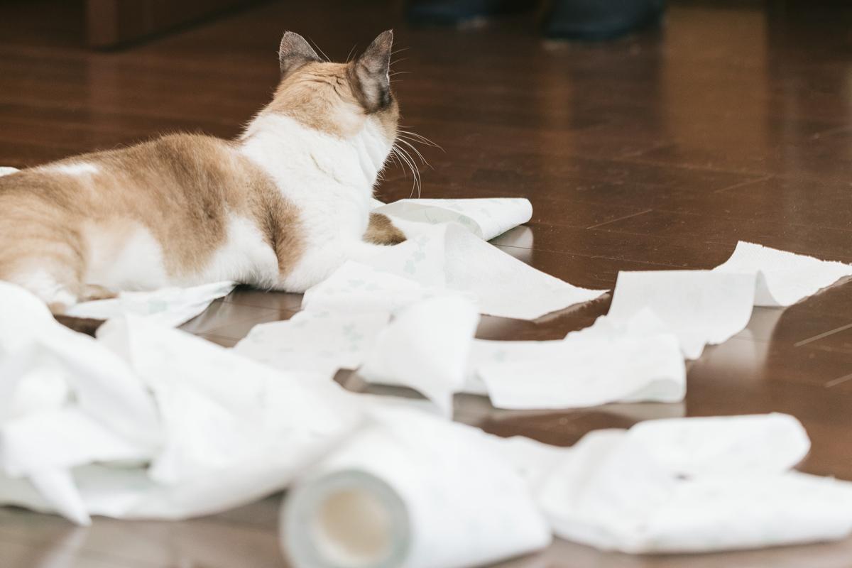 マカダミアナッツオイルは犬や猫に厳禁!成分に中毒性。使用には注意を